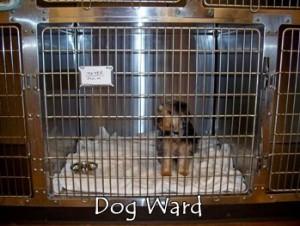 dogward-300x226