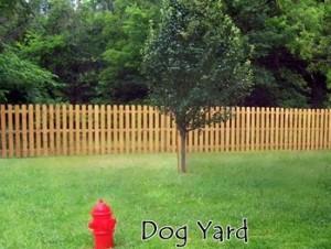 dogyard-300x226